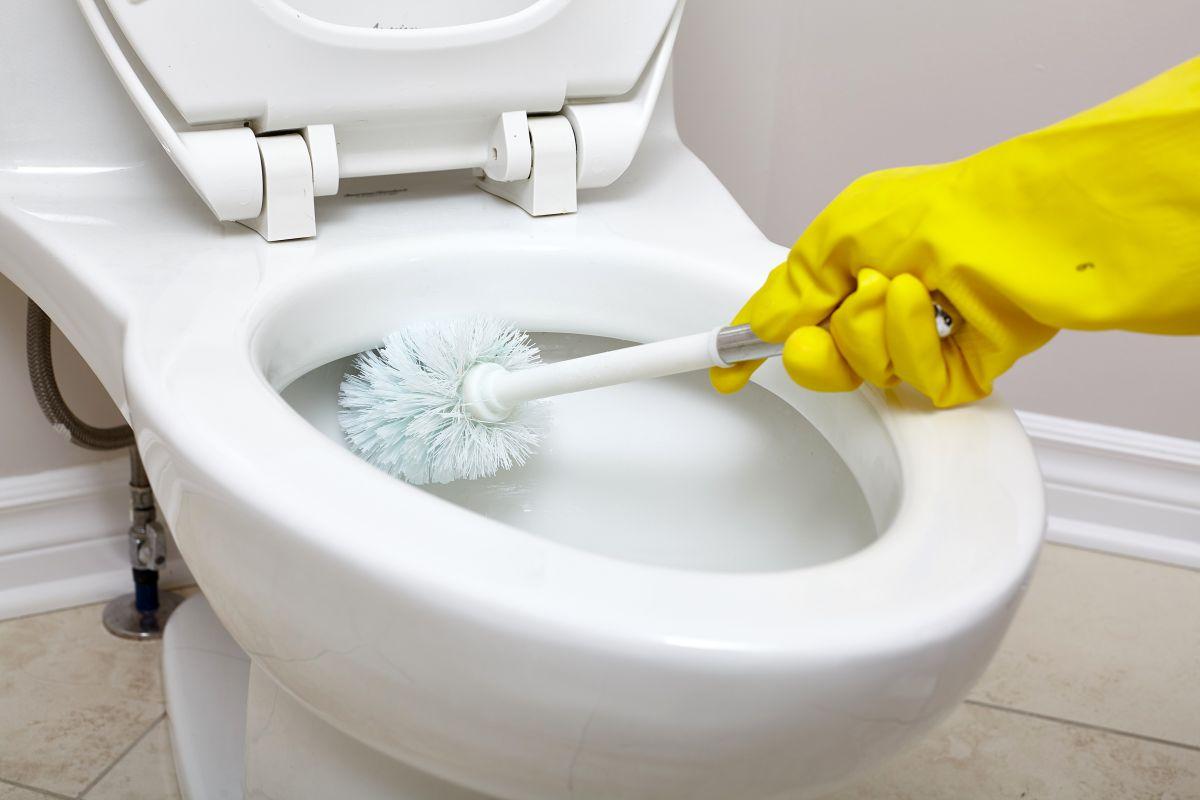 jak wybrac szczotke do wc